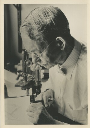 Edwin Grant Conklin seated in front of a microscope, looking at a drawing