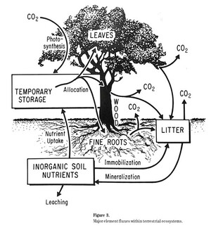 Figure from page 12 of the Ecosystems Center Annual Report 1986
