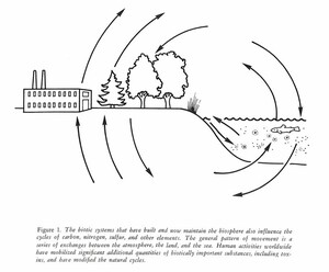 Figure from the Ecosystems Center Annual Report 1979