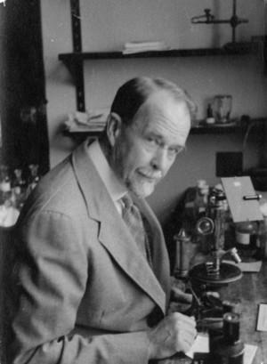 Portrait of Thomas Hunt Morgan at microscope