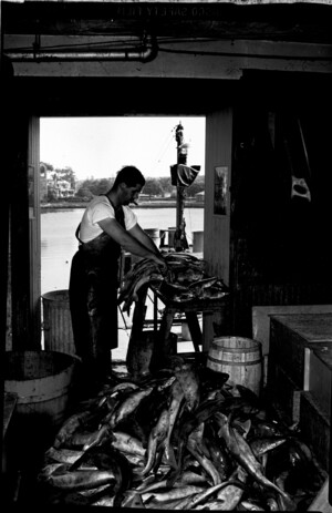 Man standing near doorway of supply house removing heads from collected dogfish. Large pile of dogfish in foreground